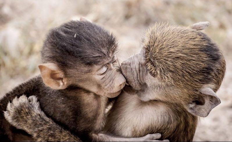 Смешные картинки про животных 2016