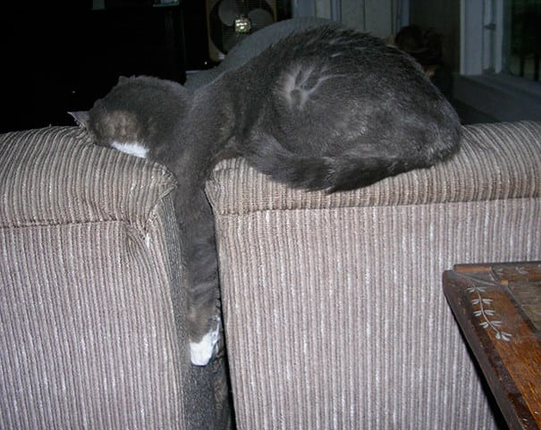 55 самых смешных спящих кошек. Милота зашкаливает!