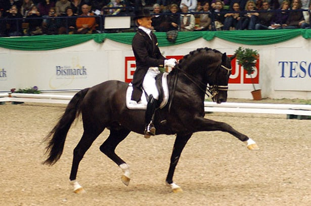 9 самых дорогих лошадей на планете