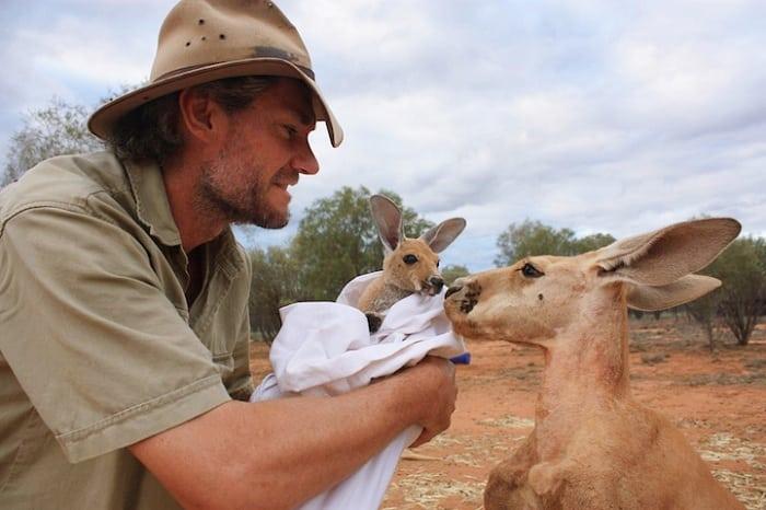 Австралиец спасает кенгурят, которые остались без мамы