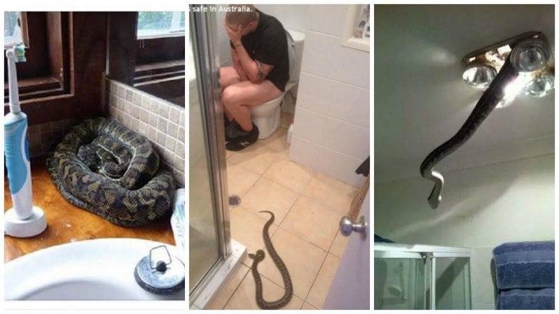 Австралия - ад для тех, кто боится змей!