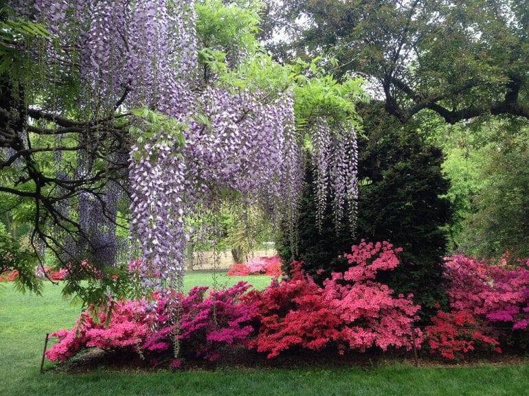 Бруклинский Ботанический Сад - украшение Нью-Йорка