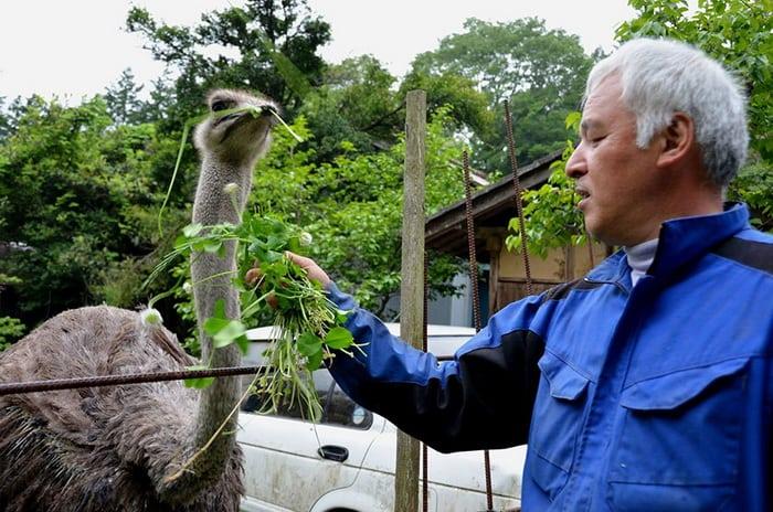 Человек, который вернулся на Фукусиму ради брошенных животных