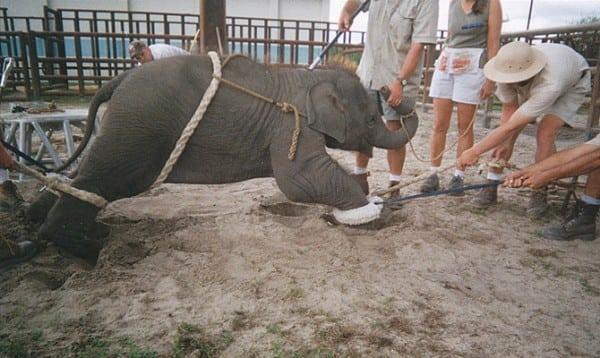 Как НА САМОМ ДЕЛЕ живут животные в цирке? Пожизненный приговор...