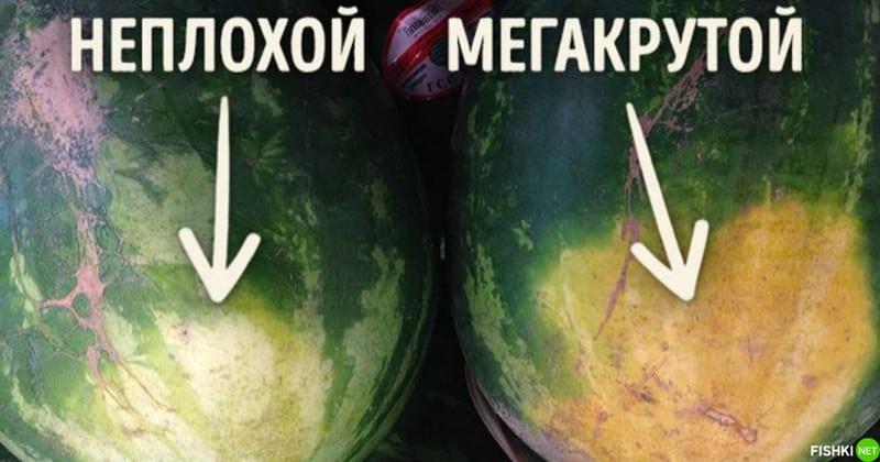 Как проверить арбуз на нитраты? Дельные советы!