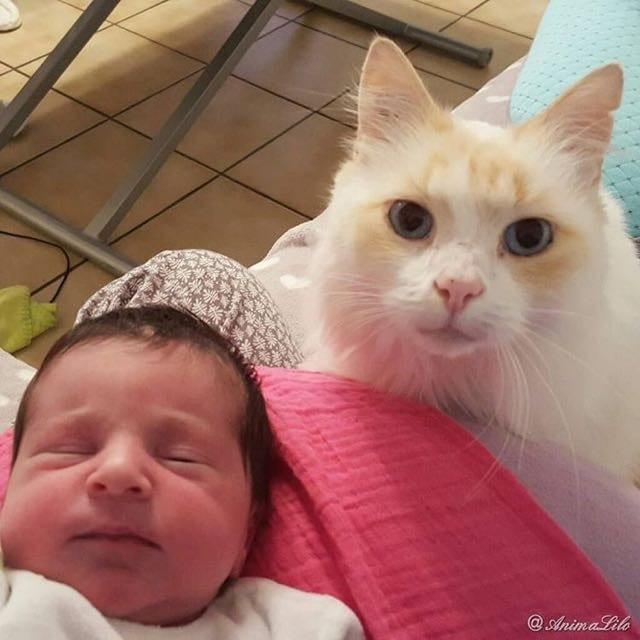 Кошка, которая полюбила ребенка когда он был в животе у хозяйки. Очень трогательная история...