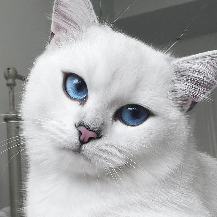 Кот с бездонными голубыми глазами и прекрасными стрелками