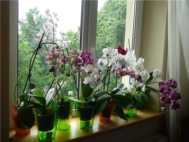 Орхидею можно держать в спальне