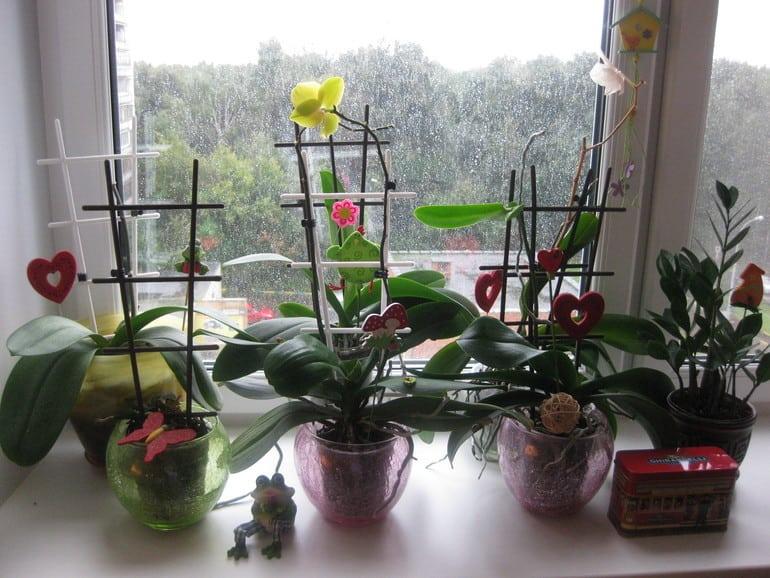 Орхидею нельзя держать в доме! И вот почему...