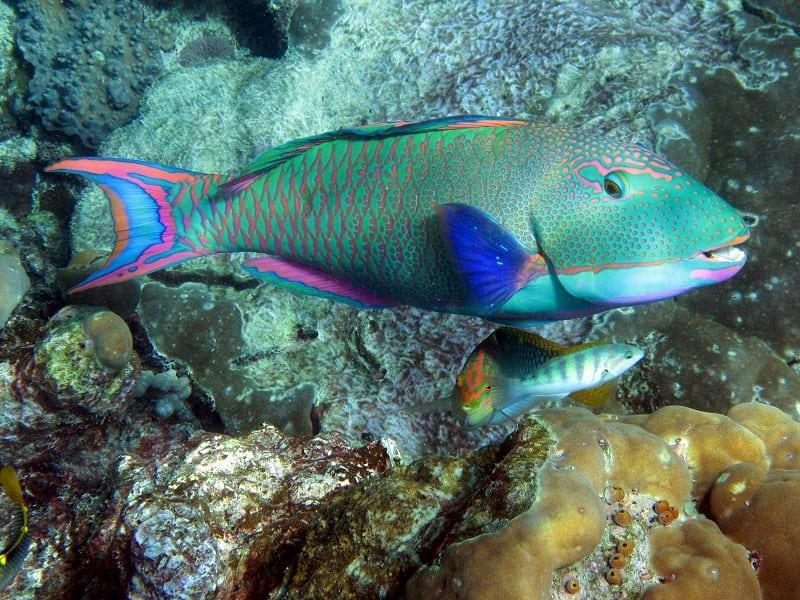 Популярная достопримечательность Австралии - Большой Барьерный Риф