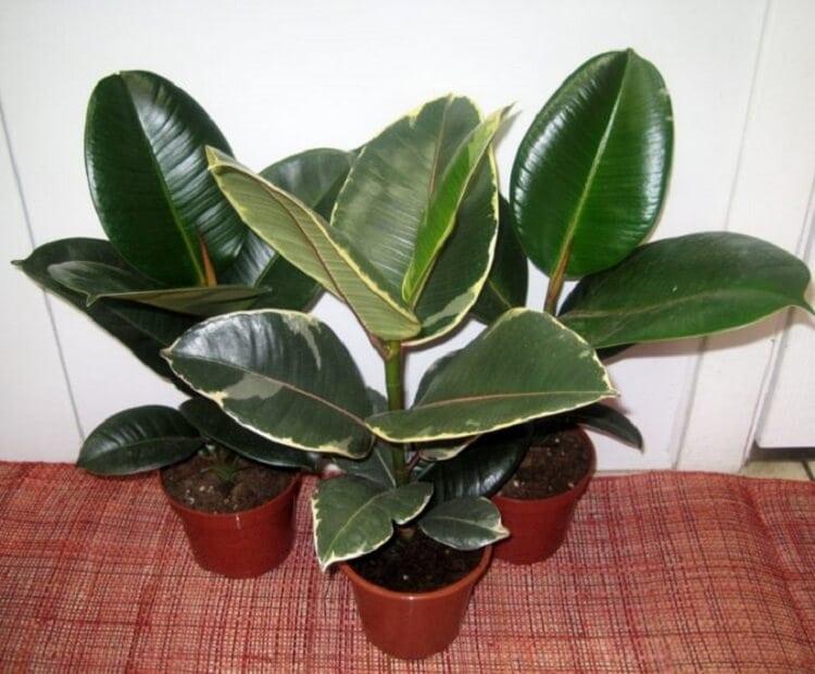 Растения, которые ОБЯЗАНЫ быть в вашем доме!