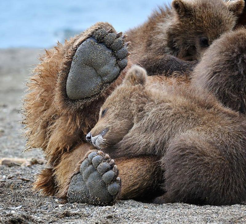 веселые картинки медвежонка