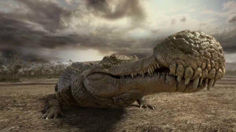ТОП 15 самых огромных животных, которые когда то обитали на Земле