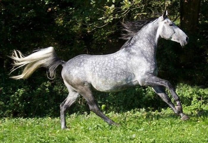 ТОП 20 самых прекрасных и необычных лошадей
