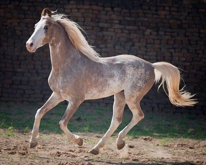 фото редких пород лошадей