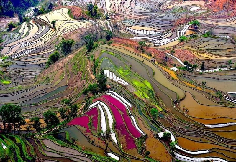 Удивительное место: Рисовые поля в Китае