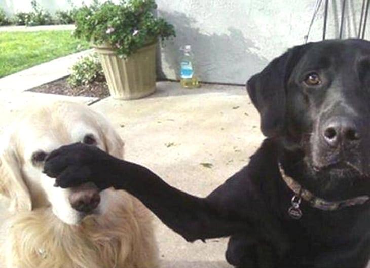 Вот почему собаки рвут в клочья вещи... Я даже не догадывалась!