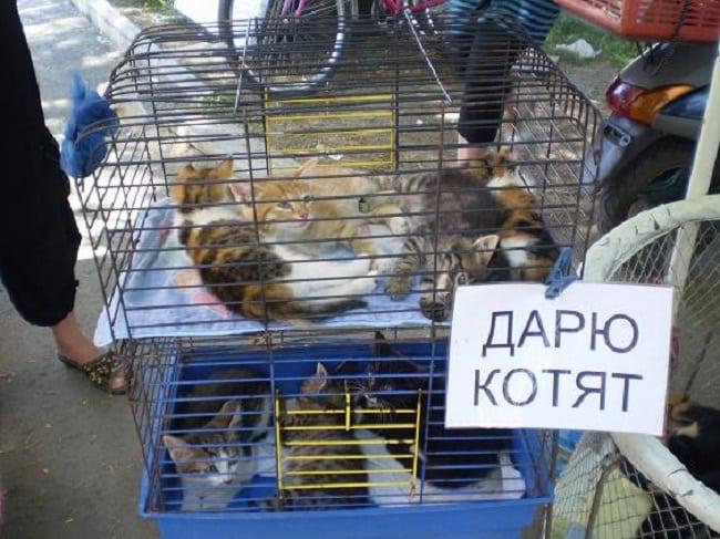 Жестокий бизнес или как издеваются над бедными животными!