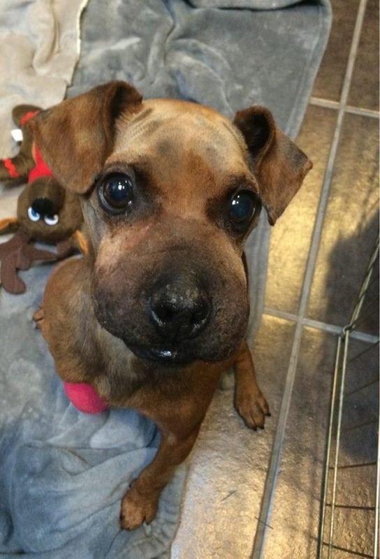 Живодер обмотал собаку скотчем и бросил умирать. Он получил 2 года тюрьмы!