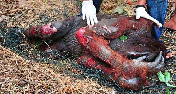 Животные страдают из за людей. Остановить это только в наших силах