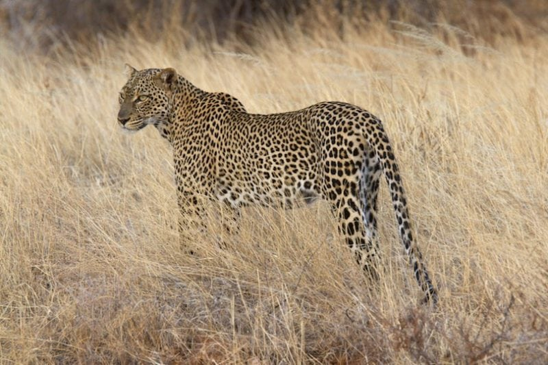 14 уникальных животных Намибии