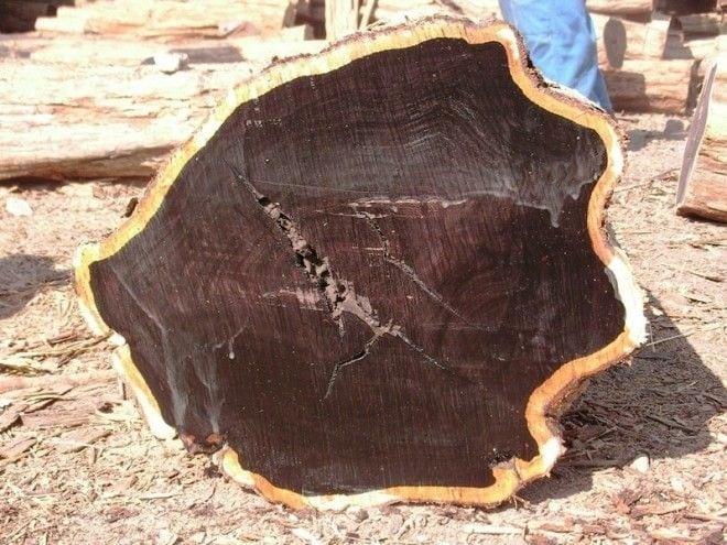 самая дорогая древесина в мире