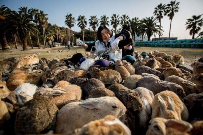 10 удивительных мест, где местных жителей гораздо меньше, чем животных