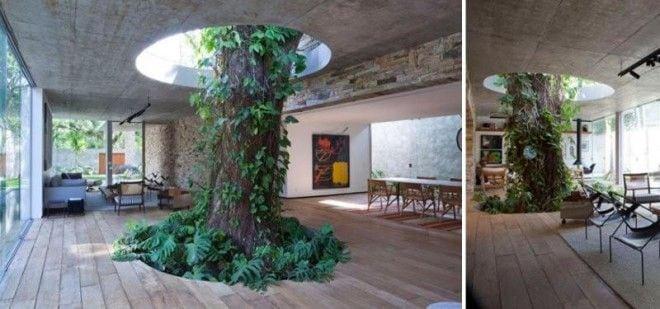 дерево в доме