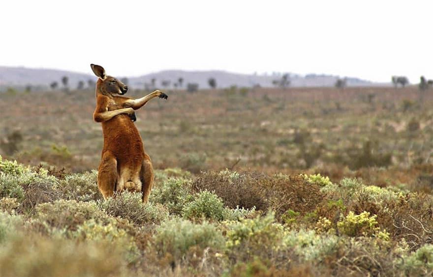 14 фотографий забавных животных, которые участвуют в фотоконкурсе 2017
