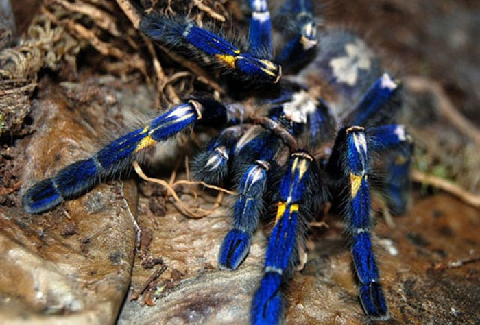 15 животных на которых можно смотреть вечно