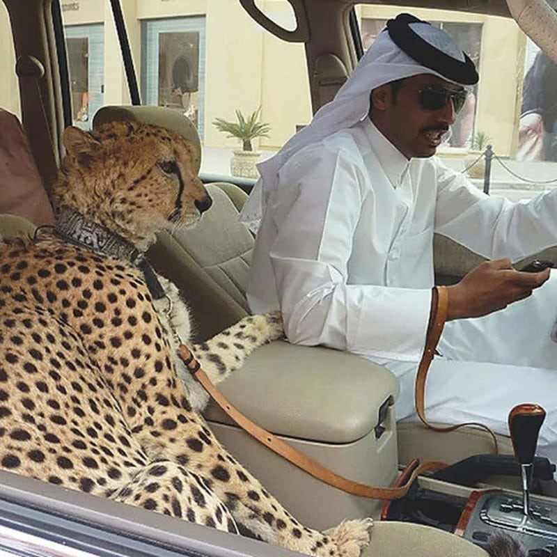 15 жутких фактов о Дубае, о которых я услышала первый раз