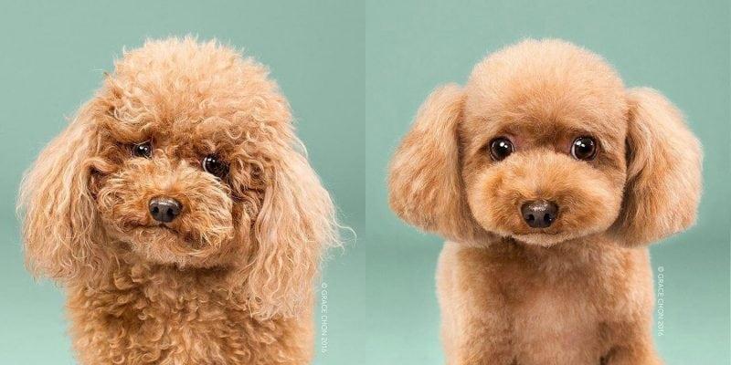 фотографии милых собак