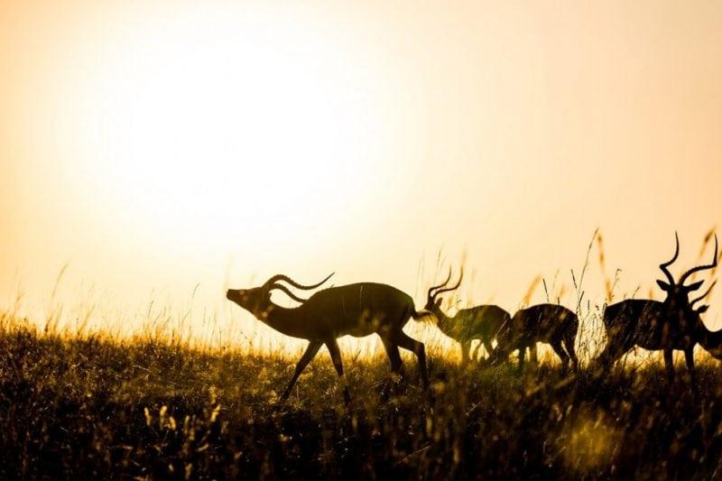 свежие фотографии дикой природы