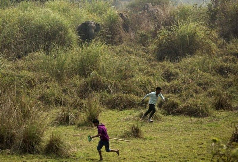 17 идеальных фотографий дикой природы за последнюю неделю