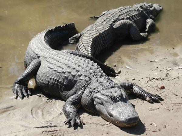 17 пар животных, которых можно ставить в пример людям
