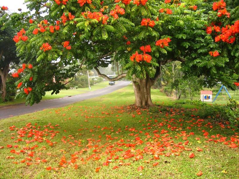 18 самых красивых деревьев Земли