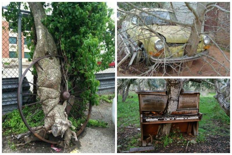 20 деревьев и растений, которые очень хотели жить