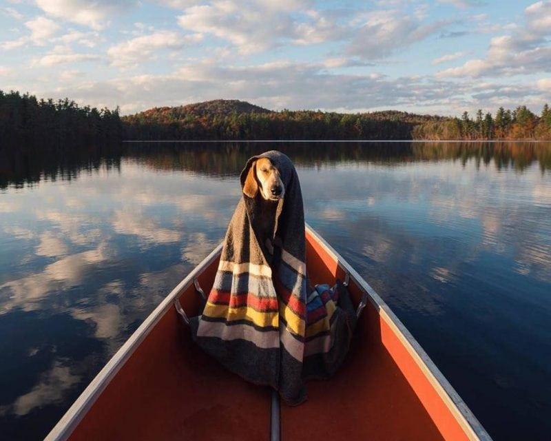 20 фотографий самой счастливой собаки-путешественницы и её хозяина