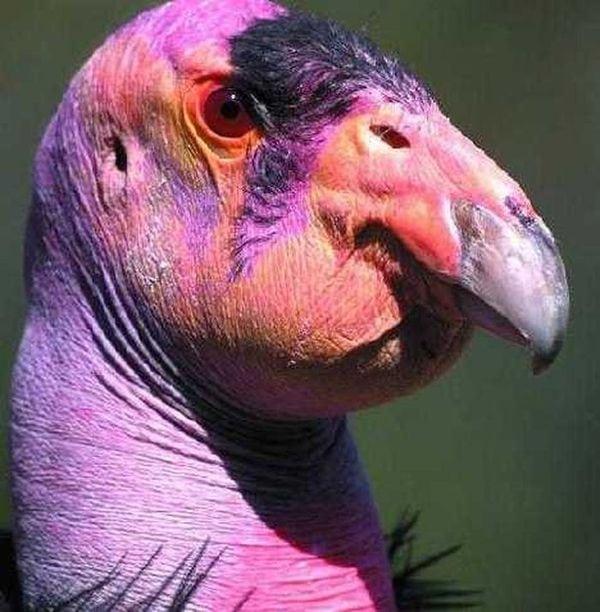 20 уникальных животных розового окраса