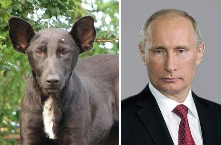 животные похожие на людей