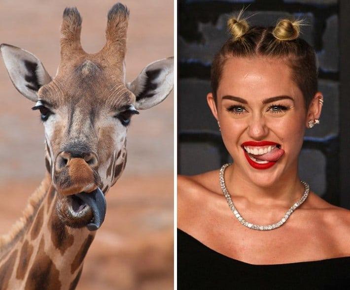 25 пар животных и людей, которые похожи как 2 капли воды