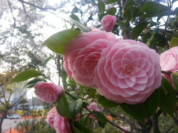 цветы которых вы никогда не видели