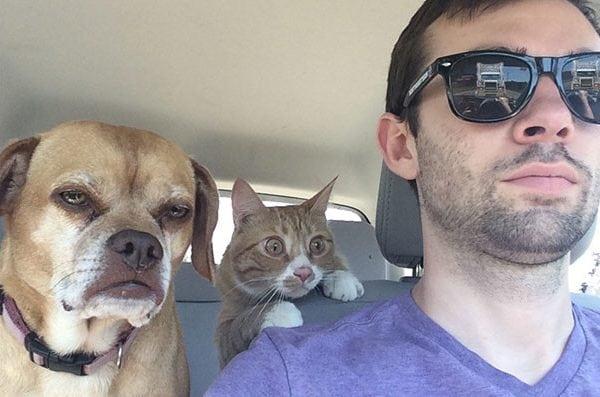 впечатлительные кошки