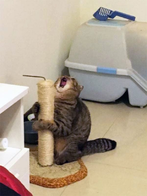 """50 кошек, которые заслуживают премию """"Оскар"""""""