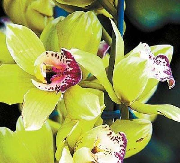ТОП 9 самых дорогих цветов на планете