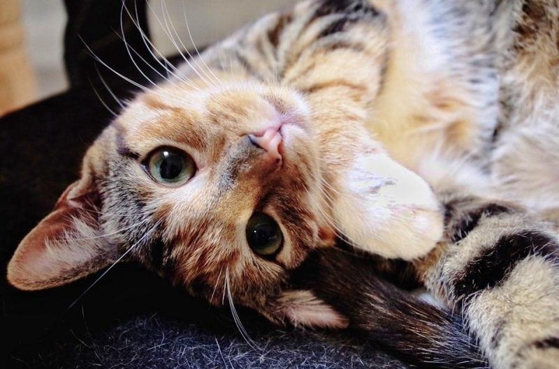 А вы тоже разрешаете своему коту спать с вами? Тогда посмотрите на это!
