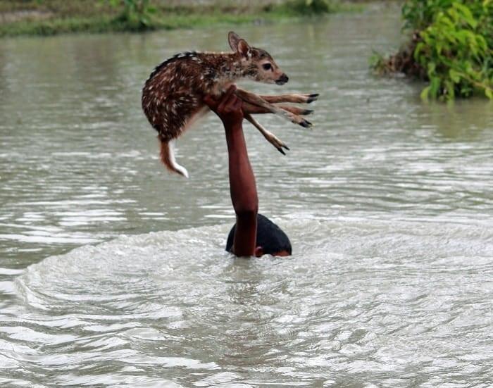 Доброта спасет мир: 20 душевных фотографий о хороших поступках
