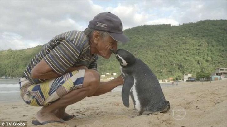 Каждый год пингвин преодолевает 8000 км чтобы отблагодарить своего спасителя