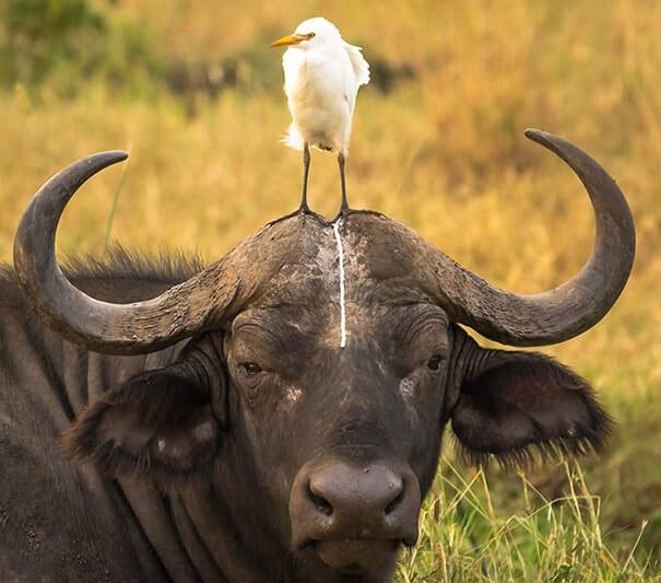 казусы с животными