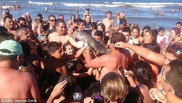 смертельное селфи с дельфином